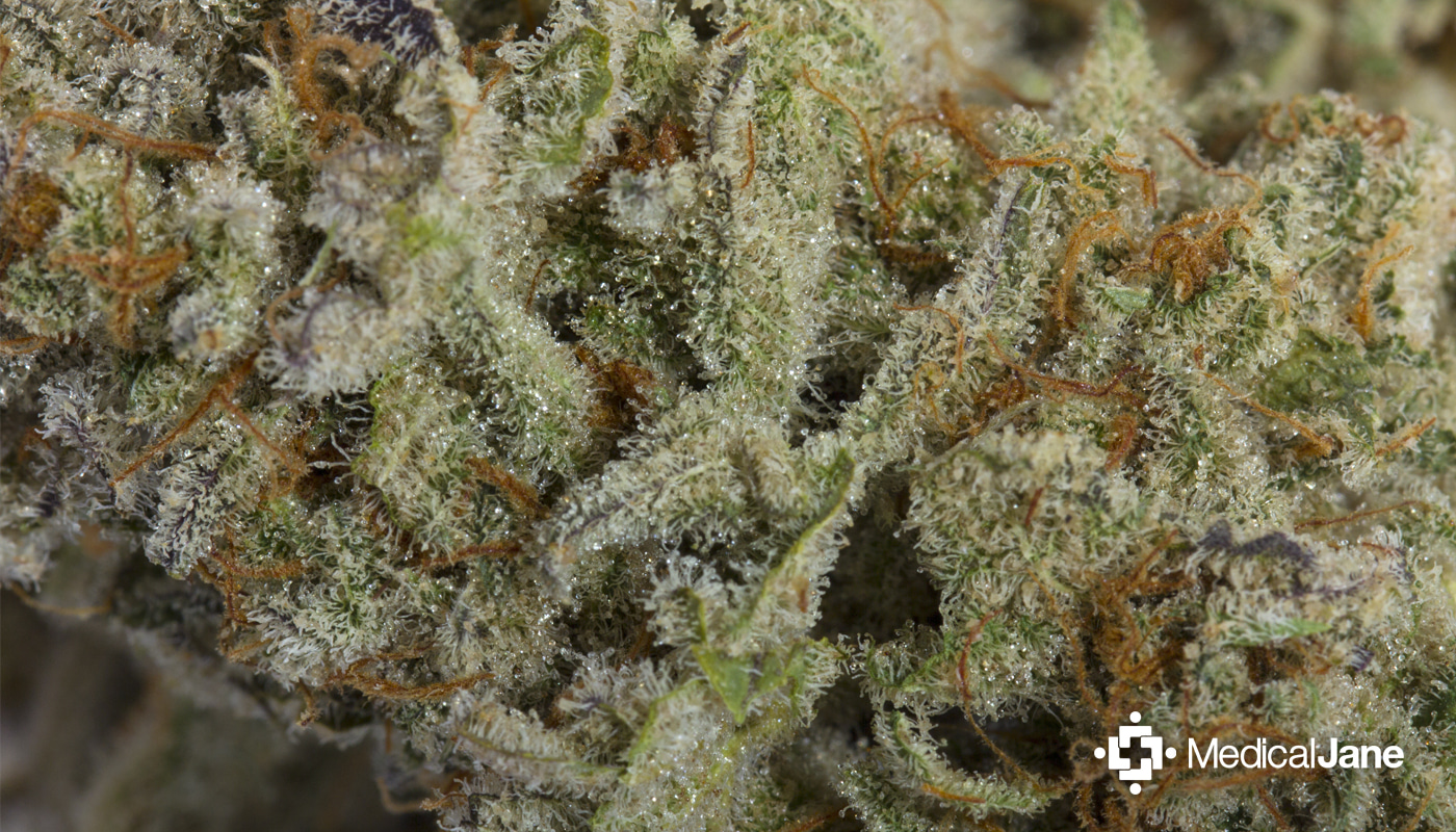 chernobyl:-extremely-potent-cannabis-strain-with-an-exceedingly-sweet-terpenoid-profile
