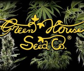 Green House Seed Company Reviews